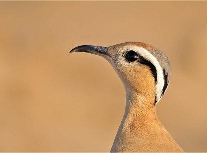 Desert National Park, Dec 2013