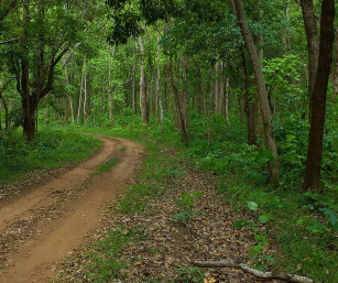SAL FORESTS, SIMLIPAL