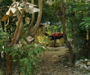 Camp Forktail Creek
