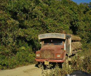 Khonoma tree truck