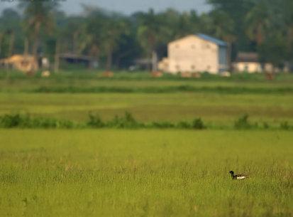 Manas Tiger Reserve, Apr 2010