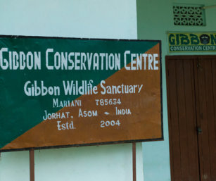 gibbon sanctuary