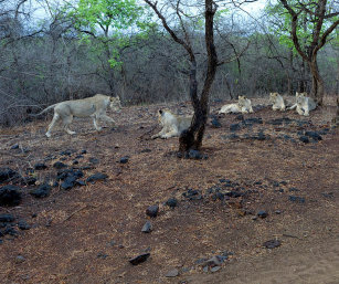 TOURISM IN GIR