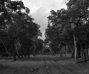 jungle-beckons
