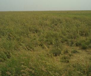 naliya sea-of-grass