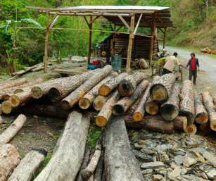 Rampant logging