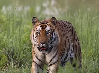 Bandhavgarh, Apr 2006