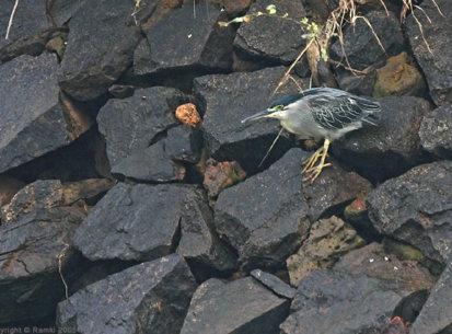 Bhadra, Oct 2005