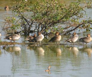 Karikili Birdscape