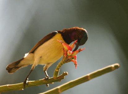 Backyard Birds, 2003